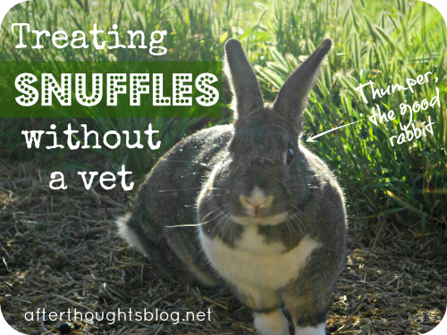Treating Rabbit Snuffles Without a Vet | Afterthoughts