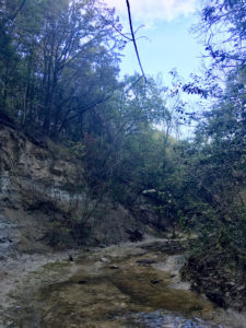 In Praise of the Creek: An Introduction